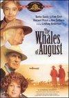Balenele din august